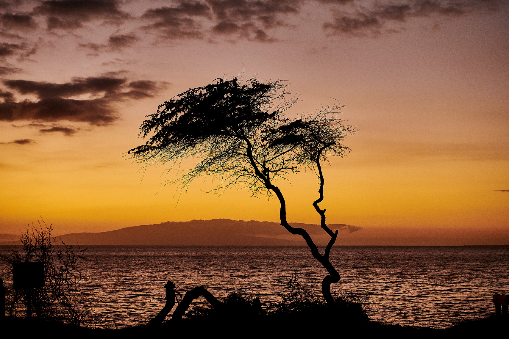 2019-Vancouver-FineArt-Photographer-ErichSaide-Hawaii-Maui-Landscape-Tree